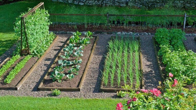 Tips To Make Your Organic Garden Succesful